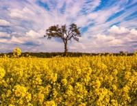 EK pieņēmusi ES Gaisa, ūdens un augsnes nulles piesārņojuma rīcības plānu