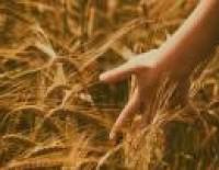 Projektu pieteikumu konkurss informācijas pasākumiem kopējās lauksaimniecības politikas jomā 2017.gadam