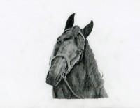 Hannas zīmēto zirgu izstāde